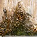 Marissa Quinn<br><em>Preparation</em>, 2012<br>Oil, bones, dried plants, and mixed media on wood panel<br>4 x 2 ft.